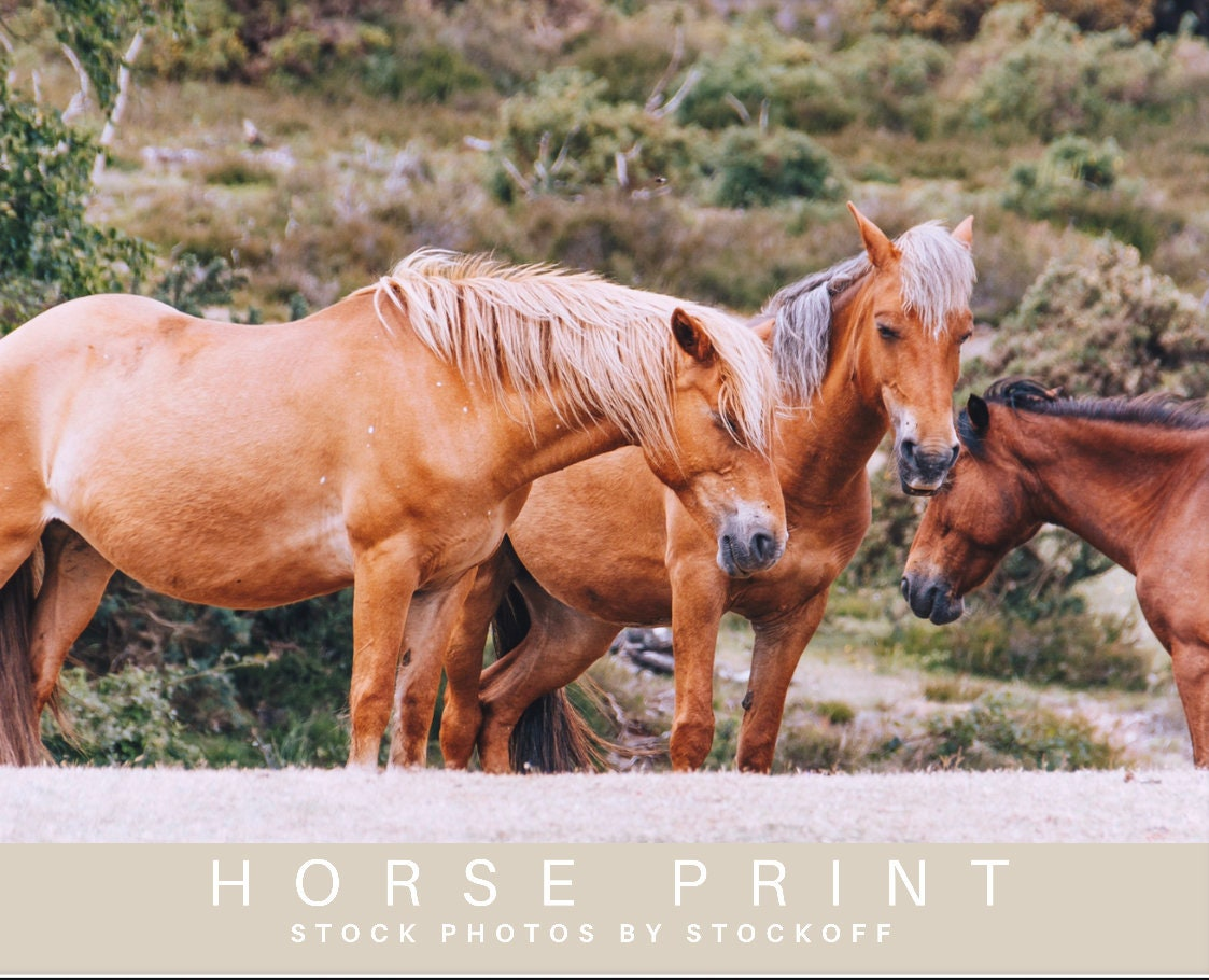 Horse Coloring Pages That You Can Print