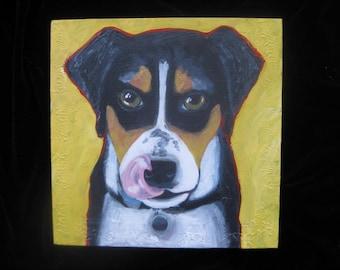 Dog portrait, Entlebucher Mountain Dog