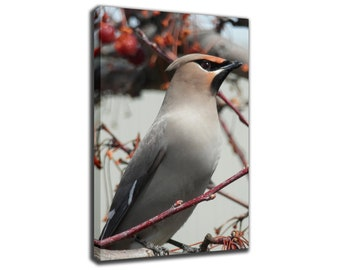 BOHEMIAN WAXWING Bird on a Branch - Canvas/Poster Wall Art Pin Up HD Gallery Wrap Room Decor Home Decor Wall Decor