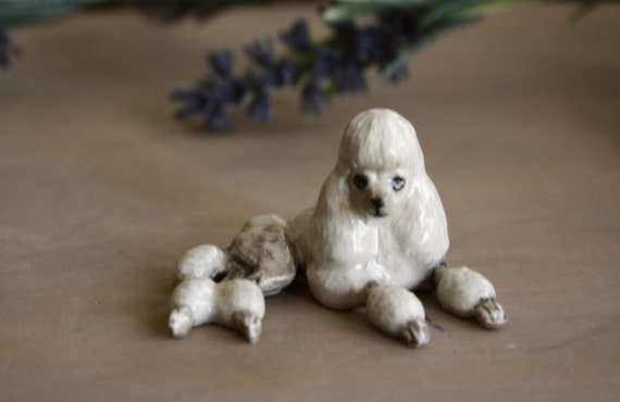 Poodle Dog Miniature