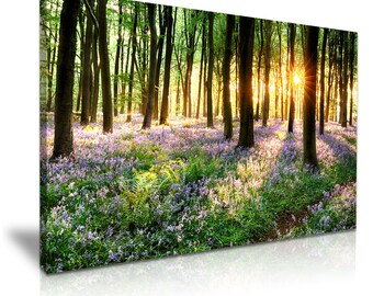 Bluebells Forest Tree Sunlight Canvas Wall Art Picture Print 76cmx50cm