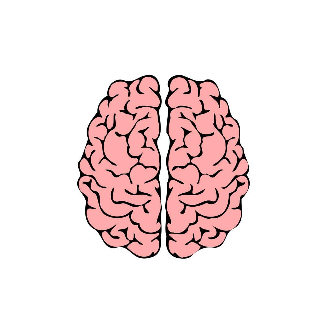 Menschliche Gehirn SVG Design Cutting Datei enthält auch PNG   für Cricut  Design Space und Silhouette Studio   kommerzielle Nutzung