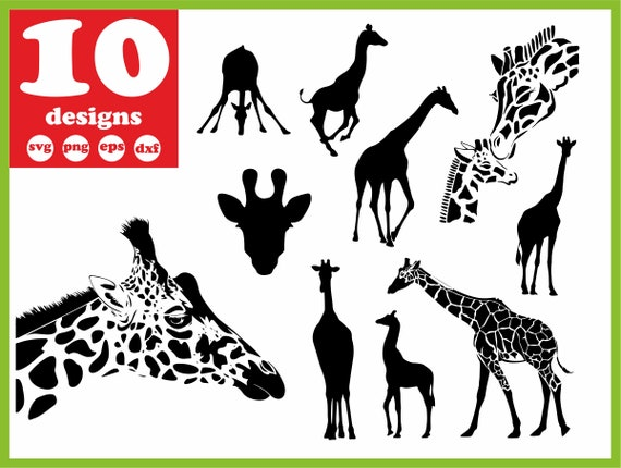 Giraffe Svg File Wildlife Digital Africa Download Baby Animal Etsy
