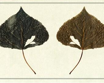 Ancient herbarium/Peuple d'italie/FINE ART PRINT/Flowering Editions