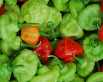 Local Peppers