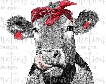Stock Photo Digital Download Cow Cow Tongue Stock Art Black Angus Black Cow Licking Cow
