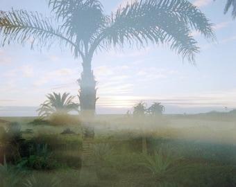 Art Print - Palm Tree Sunset