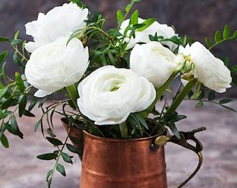 Ranunculus flowers etsy delano white ranunculus 12 fresh bulbs mightylinksfo