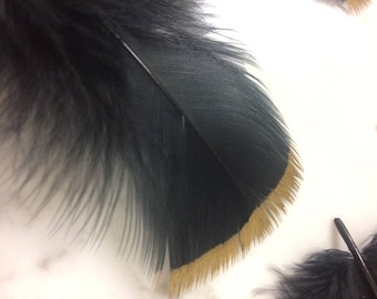 Black Feathers with Gold Tip (Set of 11)