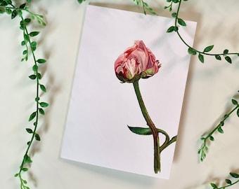 botanical flowers vegetable wall decoration graphic illustration format A6 postcard florist Map Pivoine Flowers