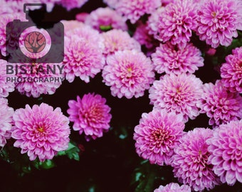 """8"""" x 10"""" Pink Flowers Photograph"""