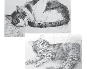 Original Graphite Drawing of your Pet Kitten or Cat