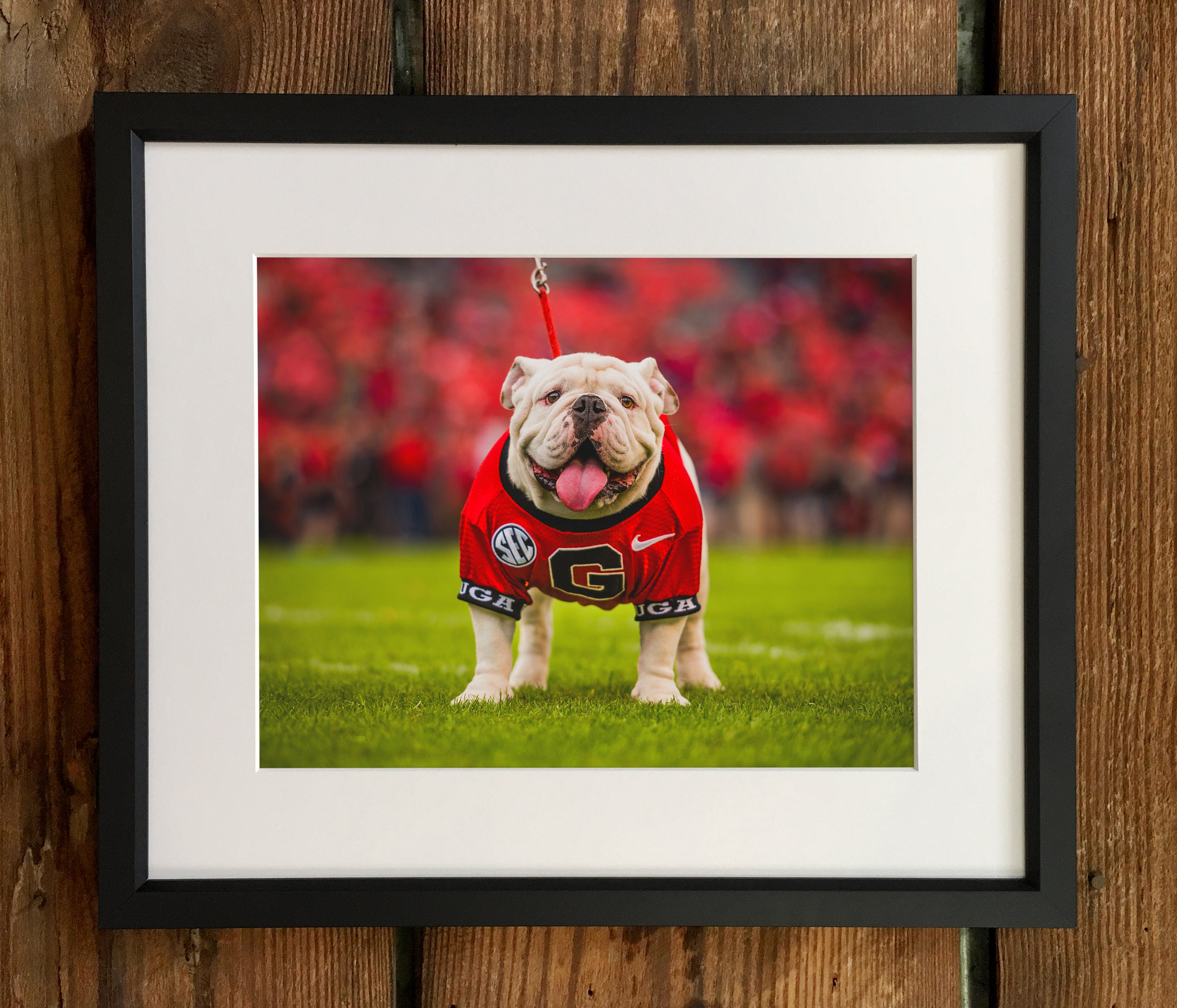 97+ Georgia Bulldog Home Decor   Georgia Bulldog Furniture ...