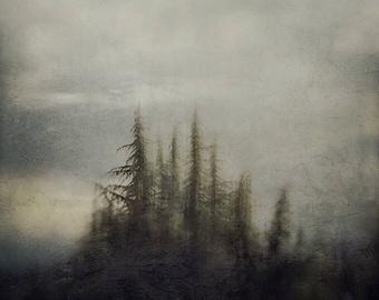 Photography print: trees, landscape, moody, painterly, wall art, fine art print