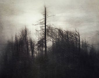 Photography print: trees, weathered trees, bare branches, winter, windswept trees, wall art, fine art print