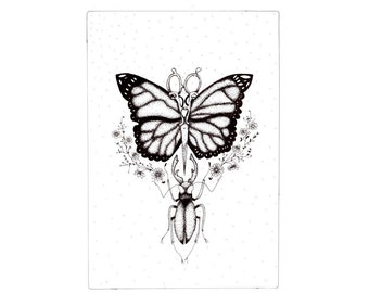 A5 Butterfly and insect illustration - Black and white art print