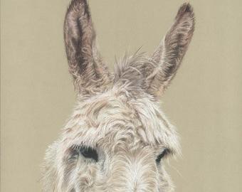 donkey, ears, donkey sanctuary, art print, limited edition, giantmousie