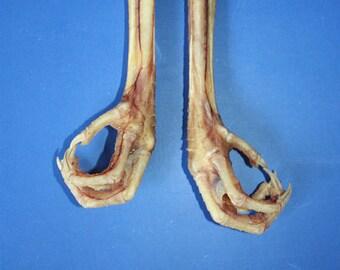 Decor - Talisman - 2 Natural Chicken Feet Charms - Lucky Chicken Foot
