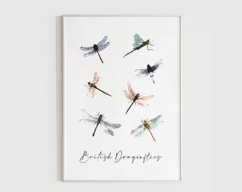 British Dragonflies Art Print / Wildlife Illustration / Original Watercolour Print