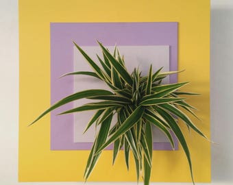 Triple vegetable frame, yellow, lavender and silver form. Clorophitum Plant