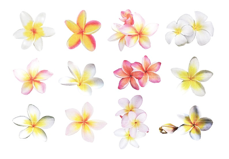 12 Watercolor Plumeria Cliparts Instant Download Personal and Commercial Use