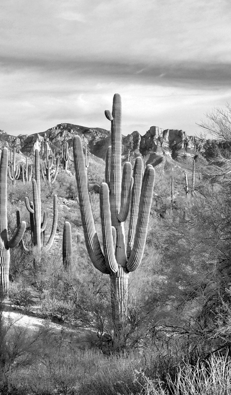 Portrait size black and white saguaro desert scene photo instant download cactus photocactus photographywall artcactus printcactus art