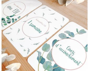 24 Pregnancy Step Cards - EUCALYPTUS Collection (24-card lot)