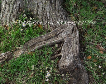 8x10 Print of Tree Roots & Flowers