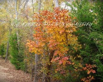 8x10 Print of Beautiful Fall Foliage