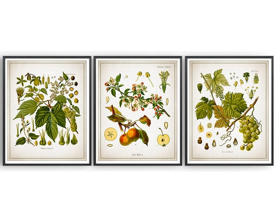 Alcohol Set of 4 Botanical Prints Hop Apple Juniper Grapevine Decor Art Gift