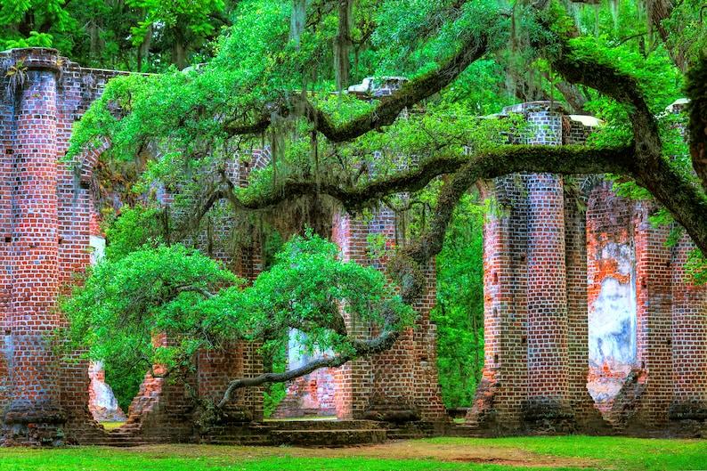 South Carolina angel oak low country color photograph wall art live oak tree Old Sheldon Church fine art. southern history Church