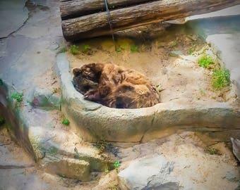 Summer Hibernation