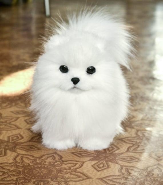 Pomeranian,Spitz,puppy,Toys Dog, Toys handmade, Stuffed,Animals and plush.OOAK,artDoll animal,kawaii plush,Teddy,black Friday