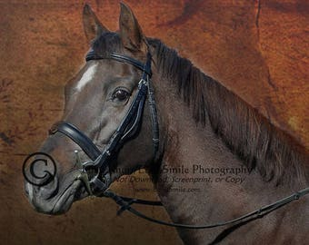Morgan Horse Portrait - Fine Art Photography Large Gallery Wrap Canvas FREE SHIPPING