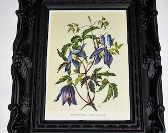 botanical print, vintage print, flower print, flower picture, botanical picture