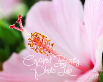 Pink Hibiscus Flower Macro Photography, Hibiscus, Pink Flower Print, Macro Photography