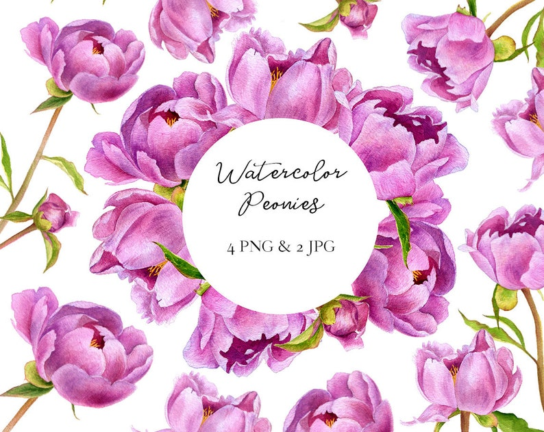 Individual PNG elements clipart Watercolor Peonies Floral digital clipart Hand painted flowers