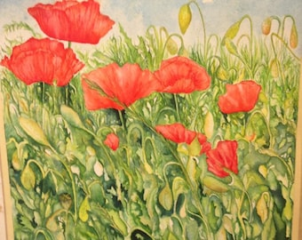 Red poppy, poppy Flanders poppy fields