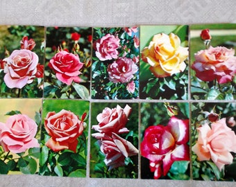 Vintage Postcards Roses. Cards Flowers Soviet Vintage Set of 10 p Made in USSR 1973 s Collectibles Roses