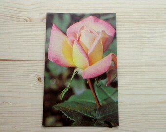 Vintage Postcard Rose. greeting card. Postcard Flowers Soviet Vintage. Made in USSR 1973 s Collectibles