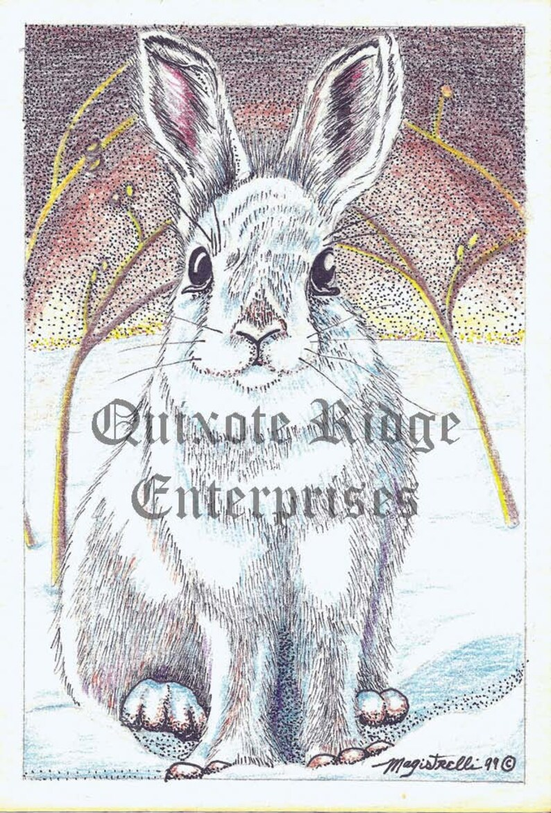 4x 6 White Rabbit  Showshoe Hare Note card with envelope from the original Pen /& Ink by Don Magistrelli