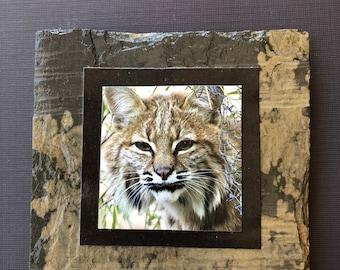 Slate Coasters — Bobcat 1