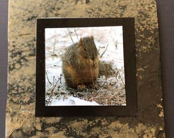 Slate Coasters — Squirrel