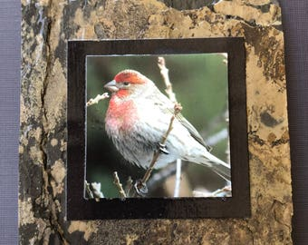 Slate Coasters — Rosy Finch