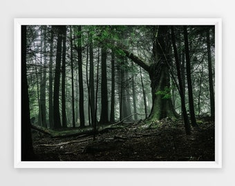 Forest Photographic Print | Fine Art Photograph | Tree Art Print | Landscape Wall Art | Wall Decor | Limited Edition