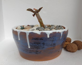 Pot. Red Ceramic planter enameled inside and outside of the workpiece. It is sent with the succulent plant and the pebbles of the photos.
