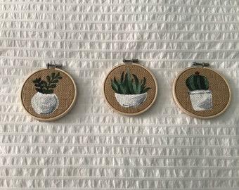Succulents, set of three