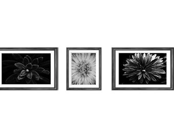 lot of 3 photographies of black and white plants, photo print, wall art, home decor, original gift, mother's day
