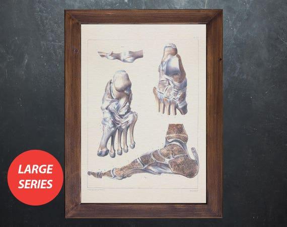 Anatomie-Kunst Fuß Gelenke Knochen Orthopäden Arzt Geschenk   Etsy