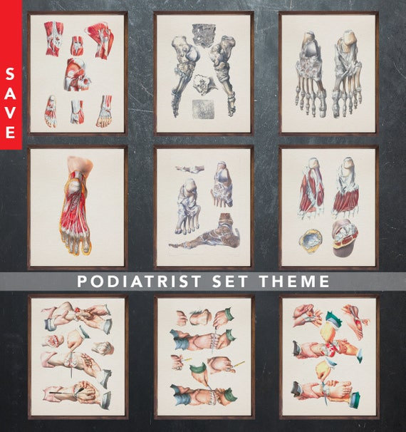 Anatomy Art Set Podiatrist Podiatry Medical Student Gift For Etsy